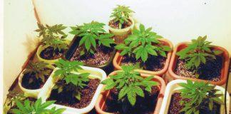 Colombian marijuana laws, Colombia marijuana