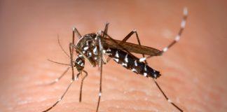 Zika virus Colombia