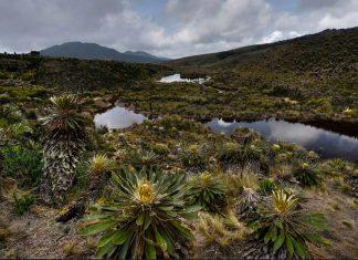 Eco Oro Colombia