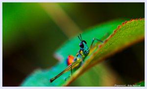 Photo: TeraBio/Flickr