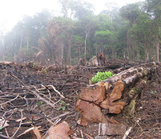 Deforestation Amazon Colombia