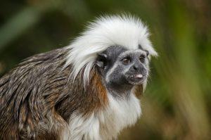 Wildlife Conservation Cartagena Colombia