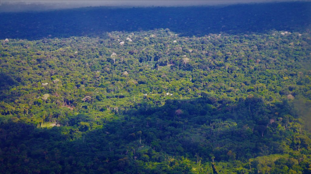 Primary Amazon rainforest in Colombia: something worth saving.