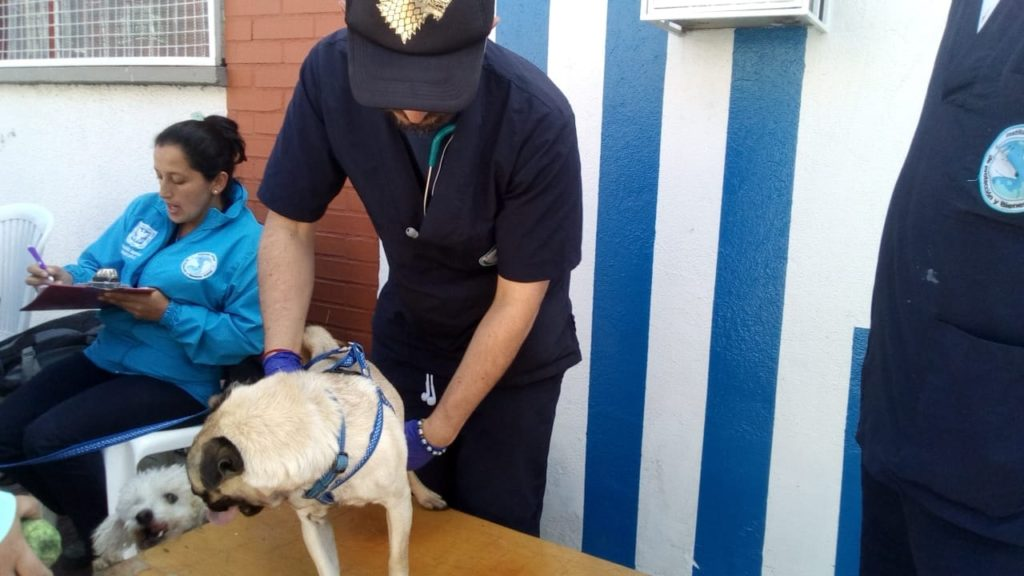 Suffer little animals: Animal mistreatment
